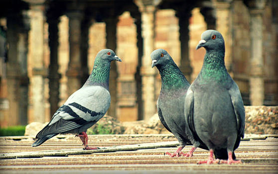 Pigeons over the Well by bogas04