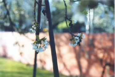 Poesie du printemps II by leingad