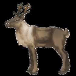 Reindeer - Brown