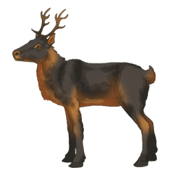 Reindeer - Black and tan