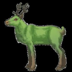 Reindeer - Special