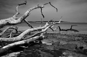 violent seaside by Vacantia