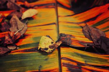 burnt orange by Vacantia