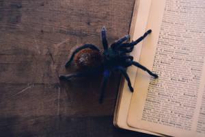 open book by Vacantia