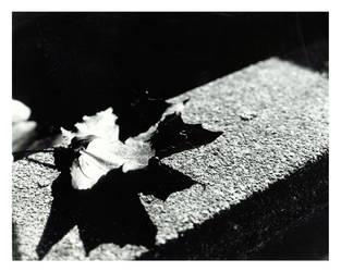 Classic Shadow Study by fluxuspoem