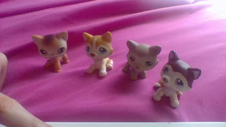 My New LPS from Ebay LPS Huskies and Shorthair