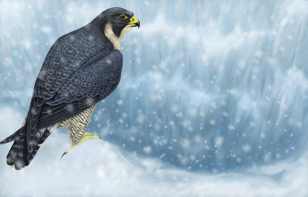 Peregrine Falcon Wallpaper Peregrine Falcon by Nachiii