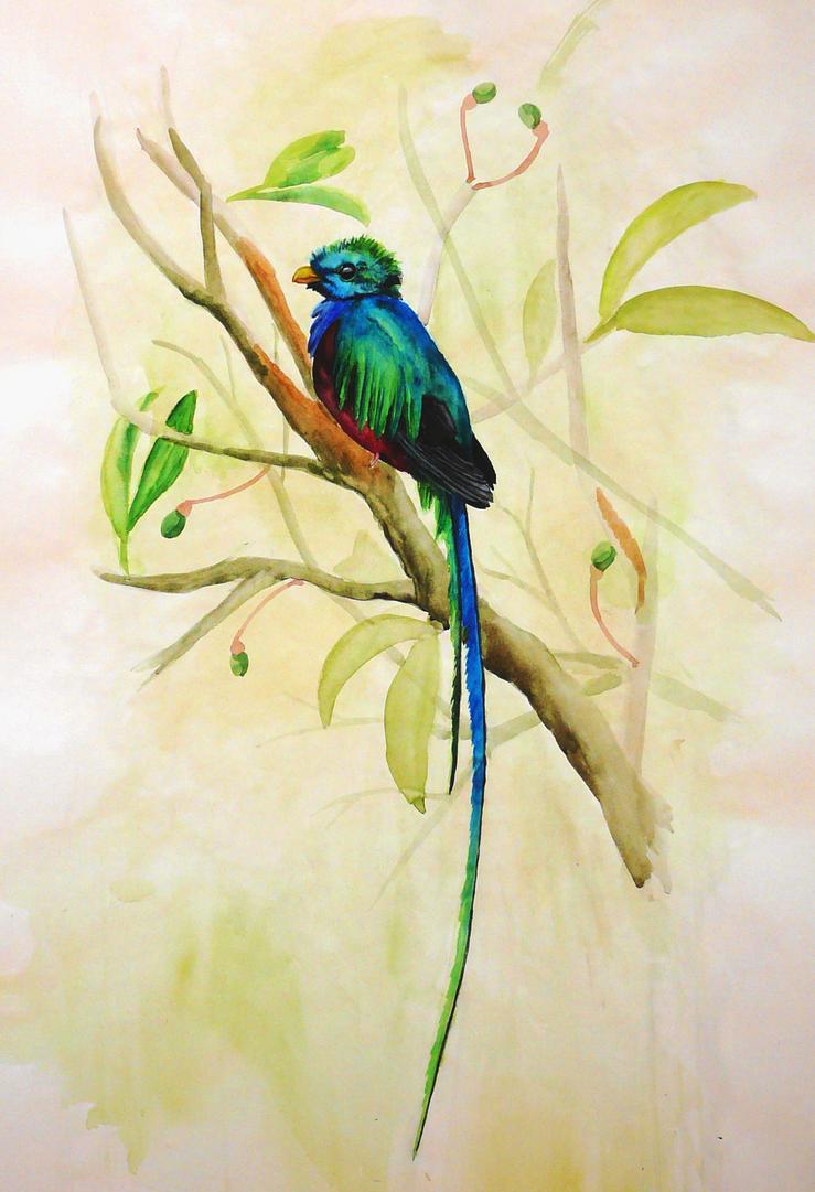 Resplendent Quetzal by ~Nachiii