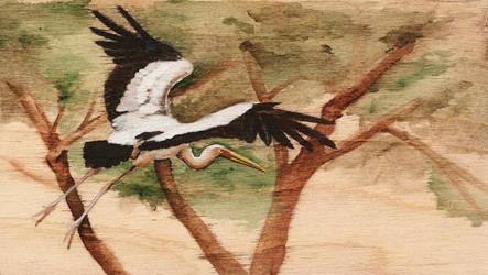 Yellow-billed Stork by Nachiii