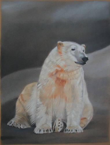 Polar Bear - Predators in Wild by chelleblock