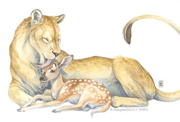 Mother lioness