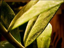 Dusty plant 2 by kazikox