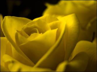 A yellow flower by kazikox