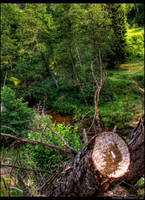 River side by kazikox
