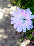 Flower by the road