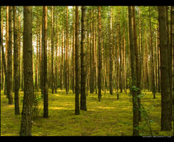 Mardasavas forest by kazikox