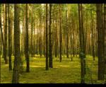 Mardasavas forest