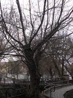 The Tree by kazikox