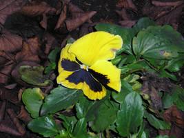 A flower by kazikox