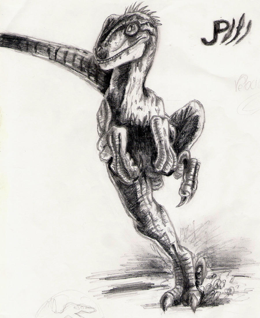 Velociraptor By Siroka On DeviantArt