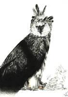 Eagle harpy - Aguila Harpia by Ryoishen