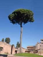 The Perfect Tree by Mattkemis