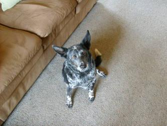 My Dog Jack by shadowcat9279