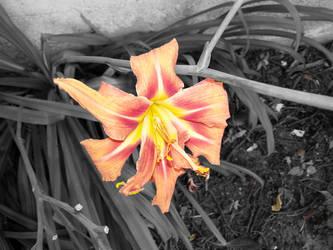 Lily by shadowcat9279