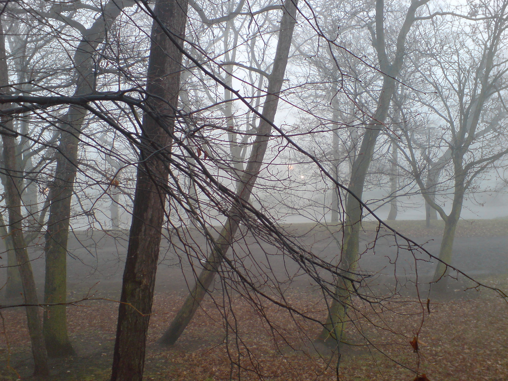Foggy in the park 3 by rudeturk