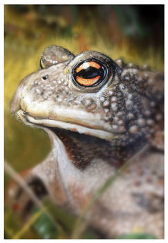 Toad, pastel