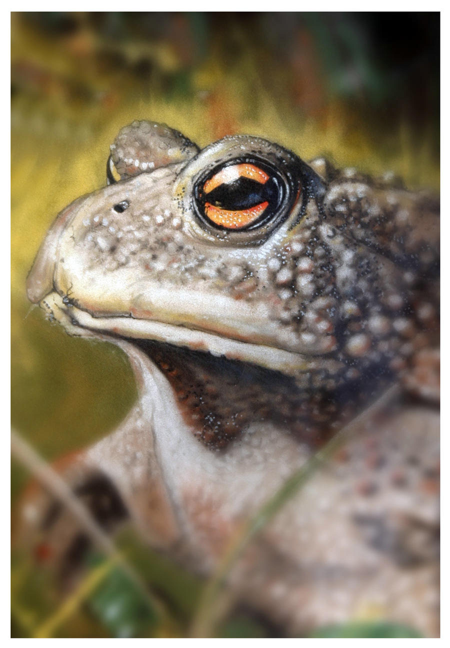 Toad, pastel