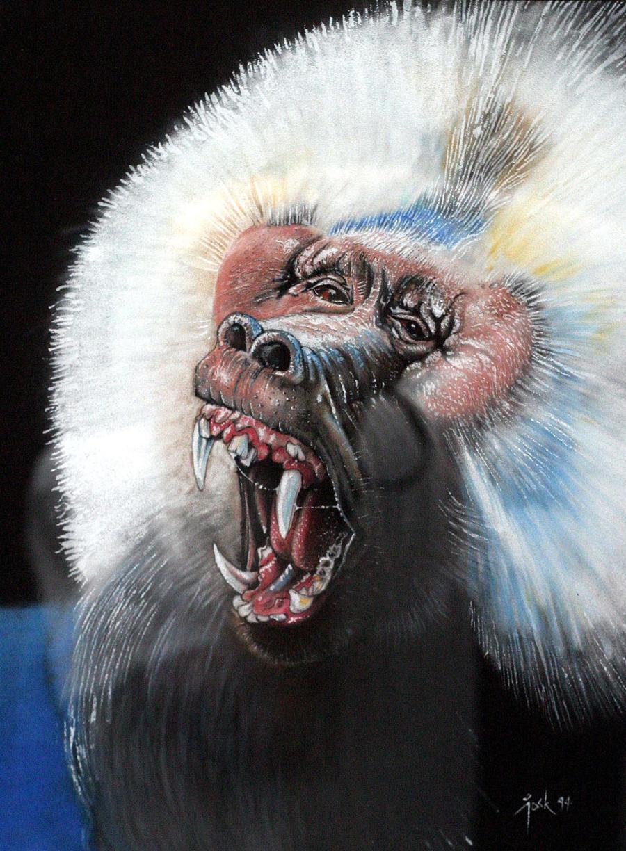 Baboon (Pavian), Pastel