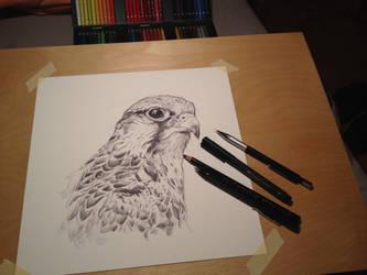 Hawk Saker, Study (WIP)