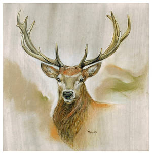 Red Deer Drawing
