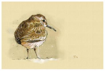 Bird Sketch III