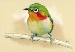 Bird Piepmatz by popChar
