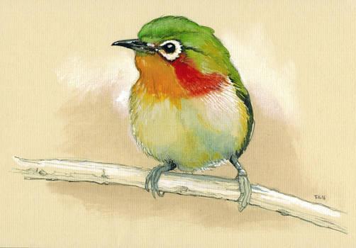 Bird Piepmatz