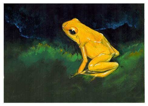 Poison Frog
