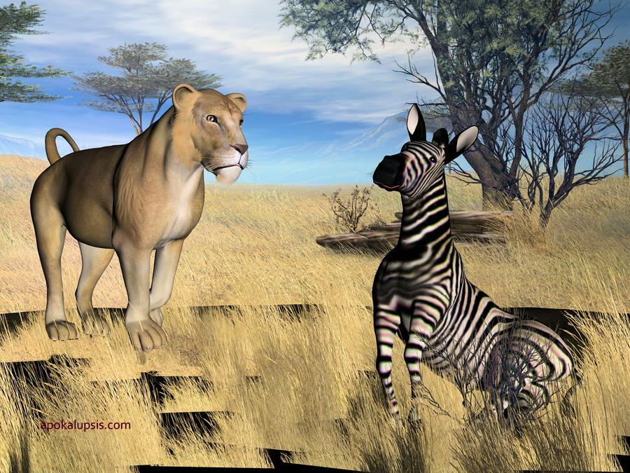 zebras and lions - photo #21