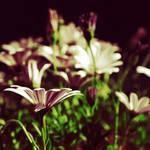 .Una su un milione by tgphotographer