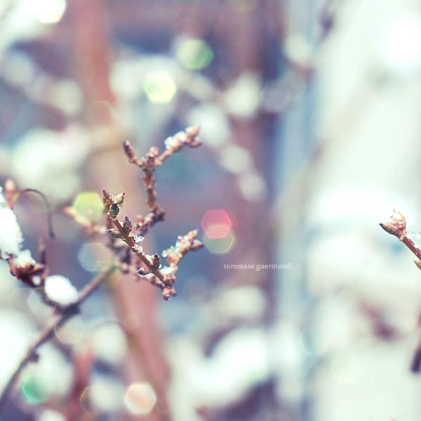 Il passo silenzioso della Neve by tgphotographer