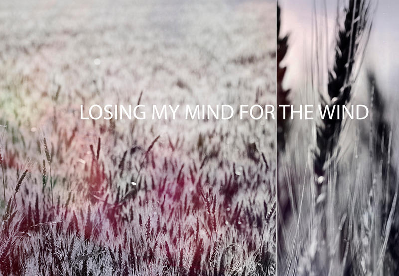 .Losing my mind for the wind