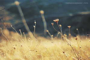 R e s p i r a r e by tgphotographer
