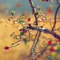 Voglia di colori by tgphotographer