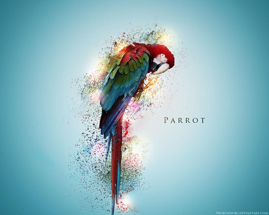 Parrot Wallpaper By Nickchoubg On Deviantart