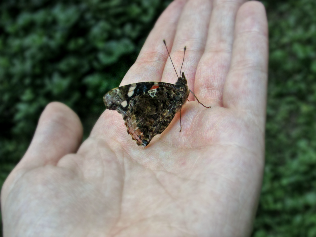 Butterfly in my hand by HayashiSorano