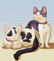 Pet portrait by raccoonhearted