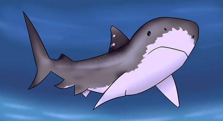 Sharkie the shark