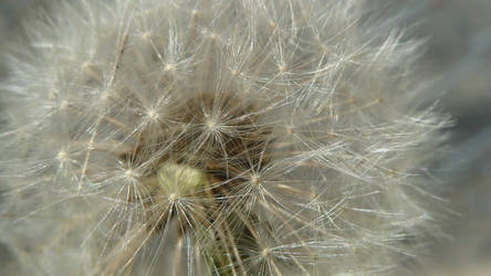 Dandelion Fuzzies II by Squirrelboy265