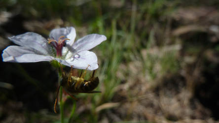 Bug and Flower II